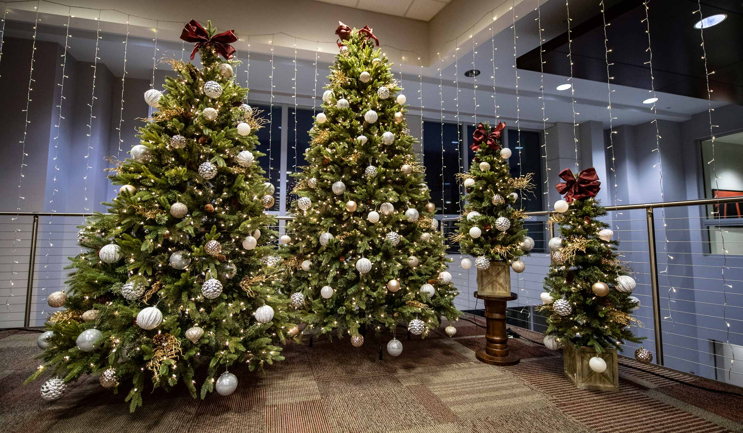 Christmas Trees in the Student Union.