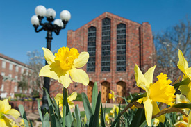Photo of flowers in front of MSU chapel